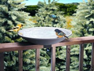 Allied Precision Non-Heated Deck Mount Bird Bath 20""