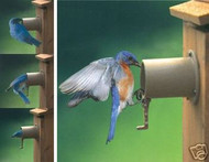 Auduon Bluebird House Guardian