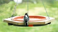 Songbird Essentials Mini Hanging Bird Bath Clay Tray
