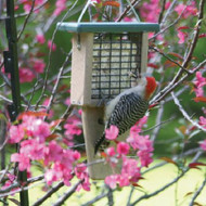 BIRDS CHOICE SGLE-CAKE TAIL-PROP(RECYCLED) BIRD FEEDER