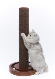 Merry Pet Cat Scratching Post with Round Ball Toy Base TOY0011721800