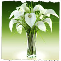Bunch Of Calla Lilies