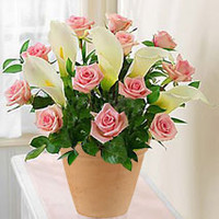 12 Pink Roses And Calla Lily Pot