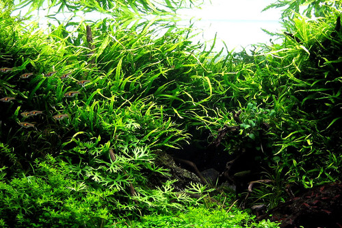Video: Beautiful planted aquascape with GLA CO2 System & Atomic CO2 diffuser