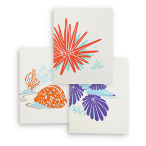 """Tropical Seashells"" Letterpress Notecard Series"