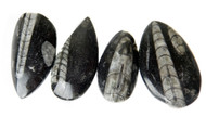 "Small Polished Orthoceras Fossils (1.50-2 .00"" range)"