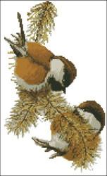 Chestnut Backed Chikadees