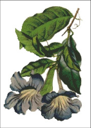 Bignonia Flower Cross Stitch Pattern