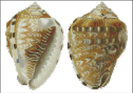 Sea Shell Pattern 801
