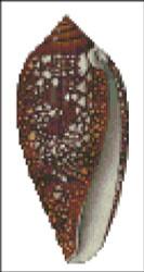 Sea Shell Pattern 803