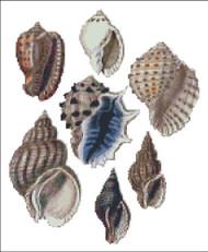 Sea Shell Pattern 816
