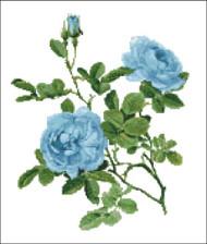 Rosa Alba Blue Rose