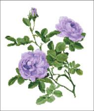 Rosa Alba Violet Rose