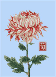Japanese Chrysanthemum Red White