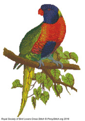 RSBL Lory Blue Mountain