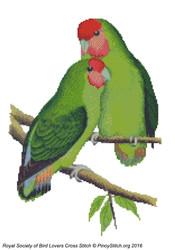 RSBL Lovebird Rosyface