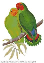 RSBL Lovebird West Africa