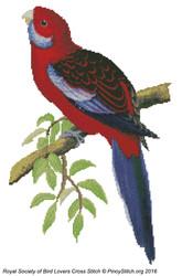 RSBL Parakeet Pennants