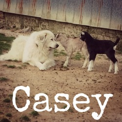 bfsc-staff-casey-small.jpg