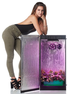 Cash Crop 5.0 - 6 Plant Hydroponics Grow Box