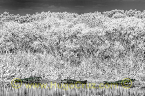 """The Three Amigos"" ● Infrared Photography"
