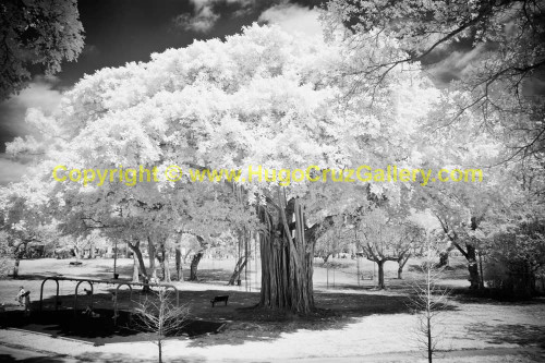 """""""Playground Guardian"""" ● Infrared Photography"""