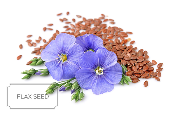 flax-seeds-a.jpg