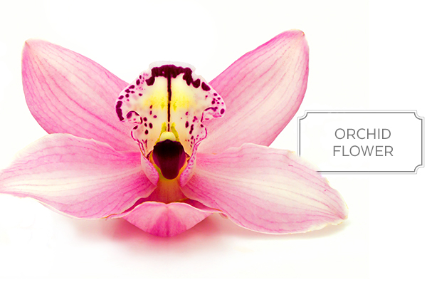 orchid-a.jpg