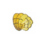 Iron On Patch Applique - Metallic Gold Sea Shell,