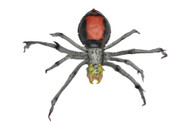 Spider Latex (Red Black) Halloween Prop