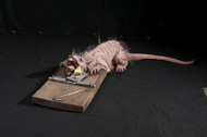 Animated Rat Trap Halloween Prop