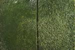 930-green-150.jpg