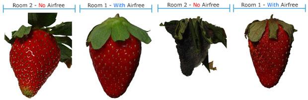 Airfree strawberry