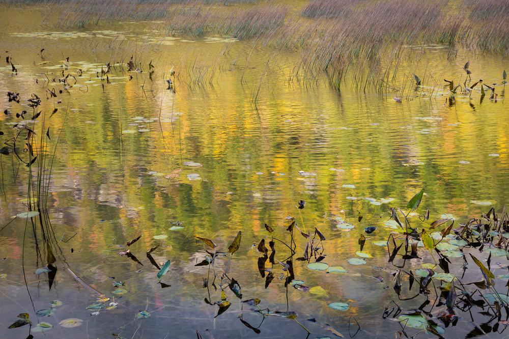 A Dreamy Pond