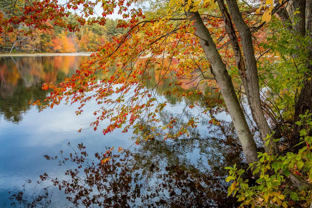Morning at the Estabrook Pond
