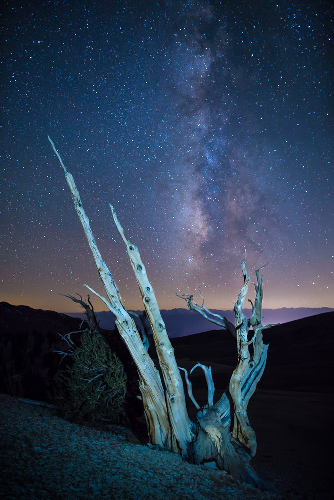The Milky Way and the Bristlecones