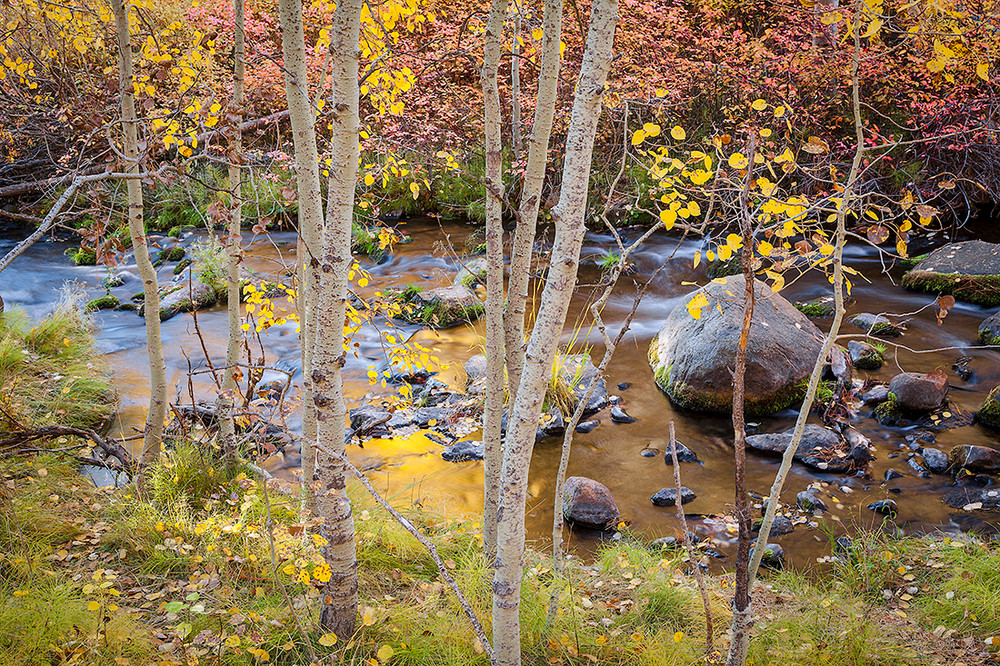 Autumn along Lundy Creek