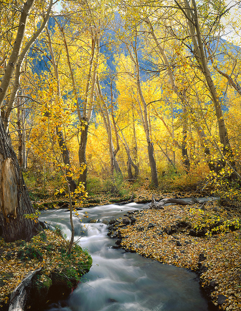 Autumn along McGee Creek