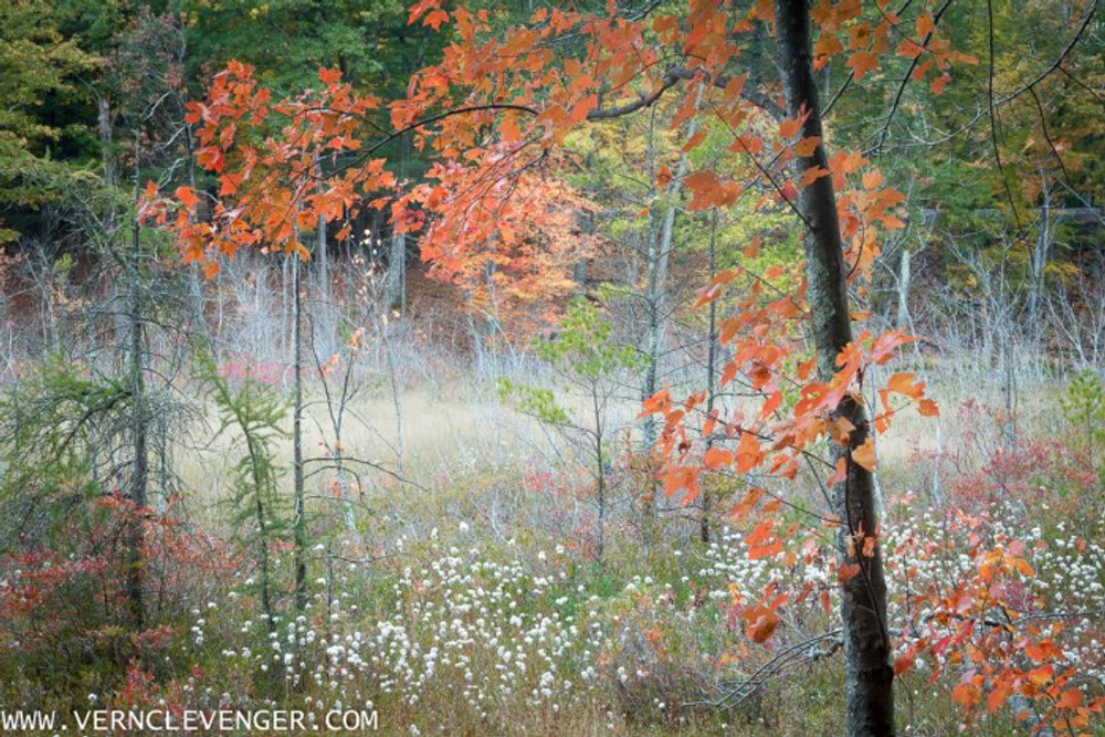 Workshop: Thoreau Country photography