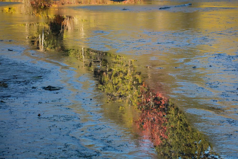 Autumn on the Schoodis Peninsula