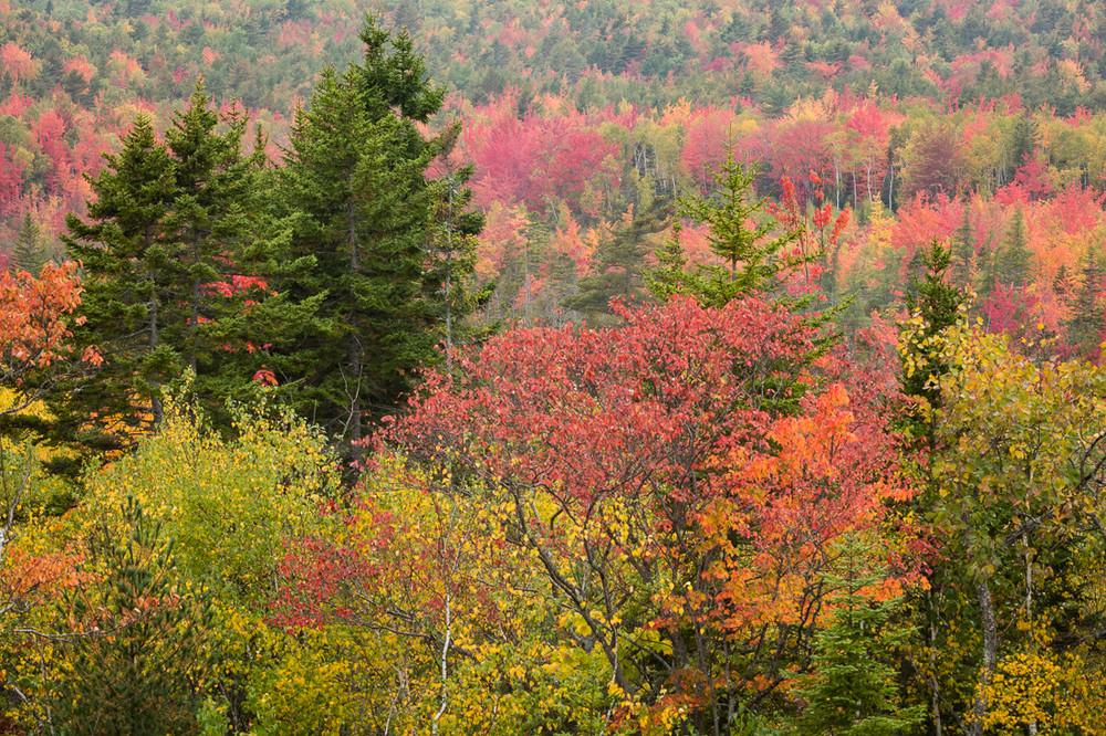 Autumn, Maine