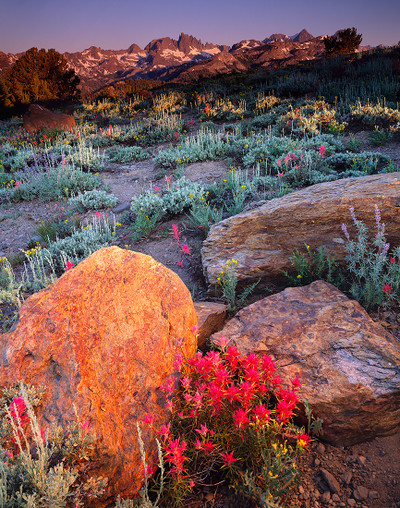 Indian Paintbrush with Mount Ritter and the Minarets