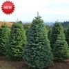 Lions Club CHRISTMAS TREE LOT