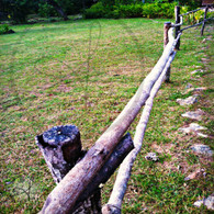 Bacab Wooden Pole Fence