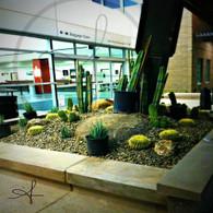 Mesa Airport Cactus