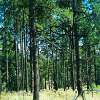 Coconino National Forest Arizona