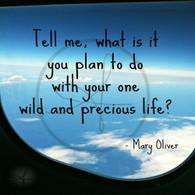Wild Precious Life 8x10