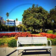Santa Monica Park Bench