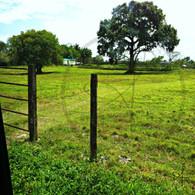 Belize Grassland and Fencing