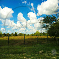 Belize Countryside Fencing